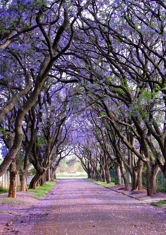 欣赏世界最美的树